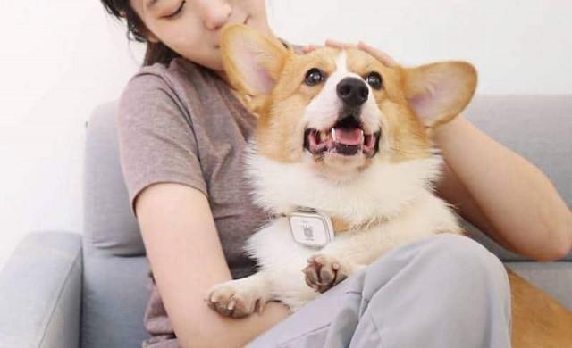 Xiaomi създаде смарт нашийник за кучета